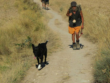 camino-with-a-dog